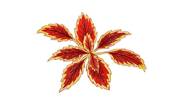 Coleus 또는 그린 쐐기풀 식물의 그림