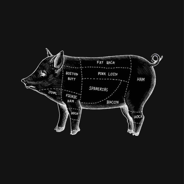 豚のいろいろな部分のイラスト