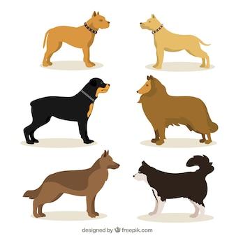 犬の品種のイラスト