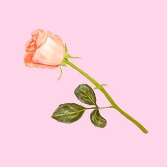 Иллюстрация розы розы цветок