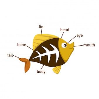 魚のボキャブラリーの図の一部、体の部分の正しい数を書く。ベクトル