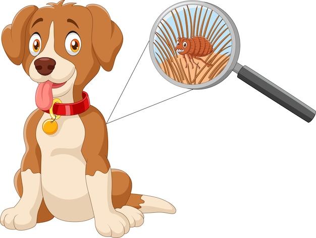 Иллюстрация блох зараженной собаки