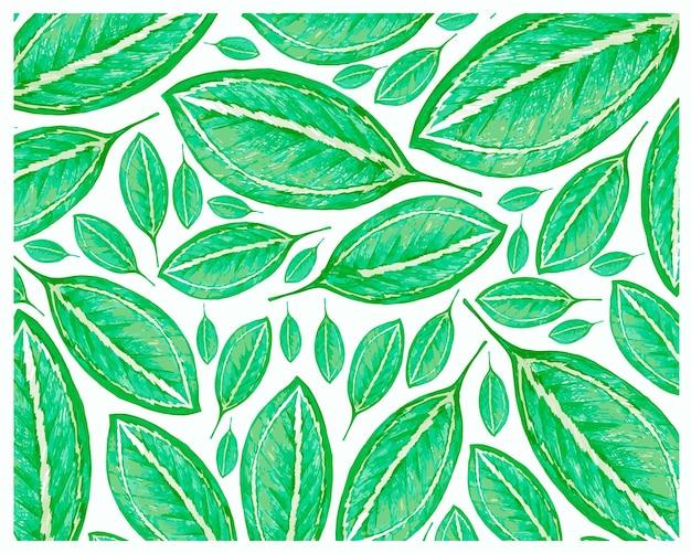 신선한 catatheaium 바이 컬러 잎 패턴의 그림