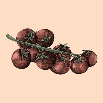 Иллюстрация свежих помидоров черри
