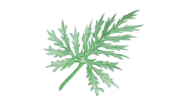 フレッシュ グリーン レイシー ツリー フィロデンドロン植物のイラスト