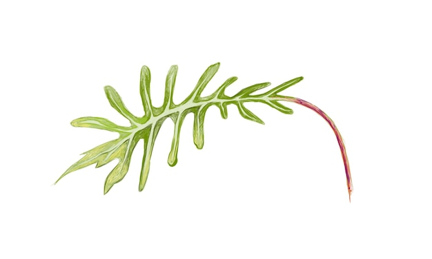 신선한 녹색 philodendron xanadu 식물의 그림