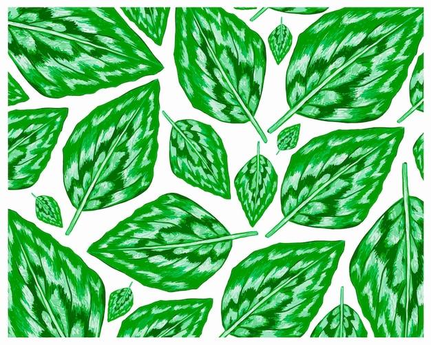 신선한 kaempferia elegans 잎 패턴의 그림