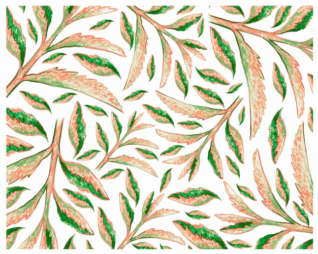 Иллюстрация свежего каланхоэ tubiflora суккулентных растений