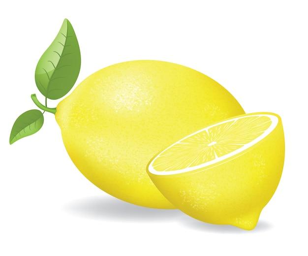 葉と新鮮なレモンのイラスト。