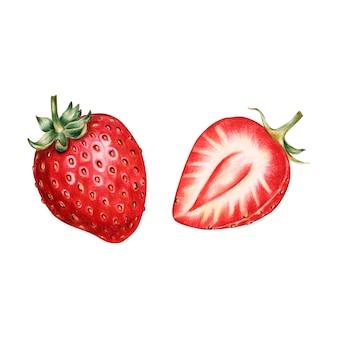 과일 수채화 스타일의 일러스트 레이션