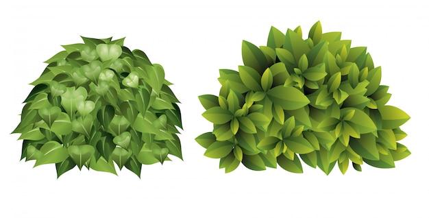 Иллюстрация садового куста с зелеными листьями в мультяшном стиле.