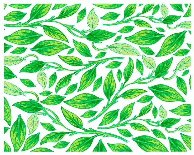 ゴールデンポトスまたはアイビーサトイモ植物パターンのイラスト