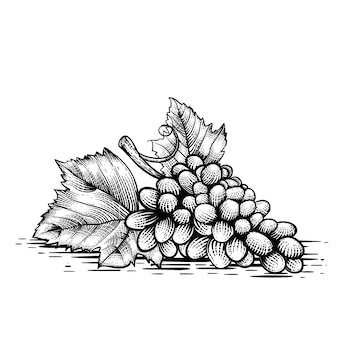 ブドウの彫刻スタイルのイラストプレミアムベクトル