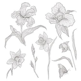 Иллюстрация графически нарисованных от руки цветов. имитационная гравировка. цветущие ирисы и нарциссы.