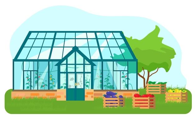 Иллюстрация теплицы с различными растениями внутри в плоском стиле. стеклянный дом с помидорами и огурцами. деревянные ящики с овощами.