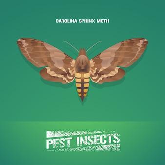 昆虫manduca sexta(カロライナスフィンクス蛾)のイラスト