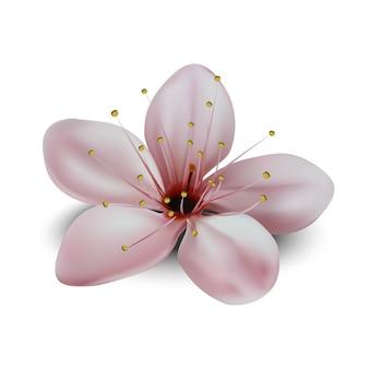 日本の桜の花の白い背景で隔離のイラスト。