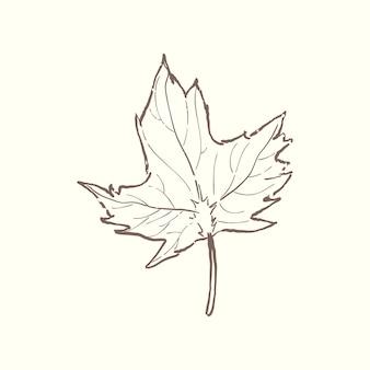 식물의 그림