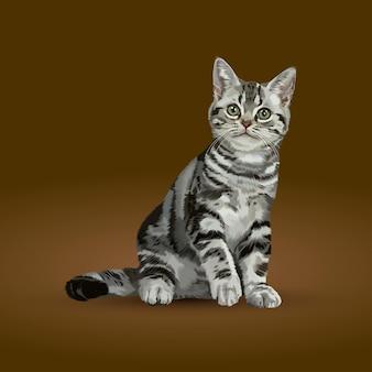 遊び心のあるアメリカンショートヘアの子猫のイラスト