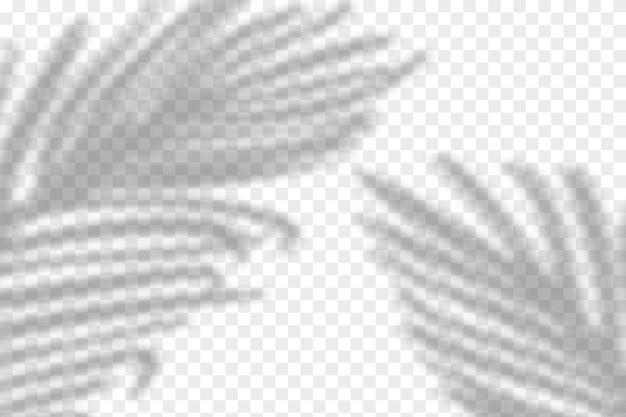현실적인 열대 그림자 오버레이 효과의 그림입니다. 야자수 잎의 흐린 투명 부드러운 빛 그림자. 제품 발표를위한 현대적인 배경.