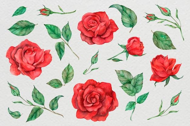 バラと葉のセットのイラスト