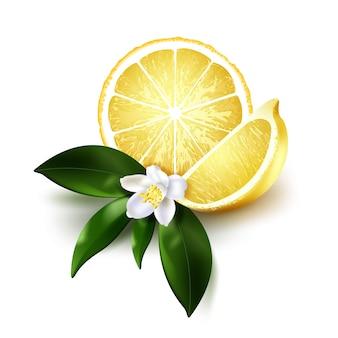緑の葉と白い背景の上の白い花とスライスと半分ジューシーなレモンのイラスト。リアルな柑橘系の果物