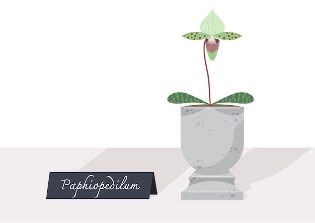 鉢植えの小さな植物のイラスト。看板のあるテーブルの上のパフィオペディルムの木。印刷