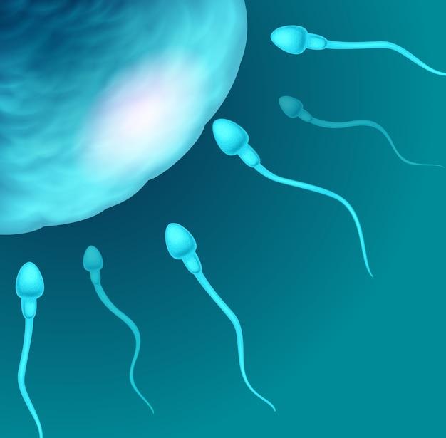 Иллюстрация сперматозоидов, идущих в яйцеклетку