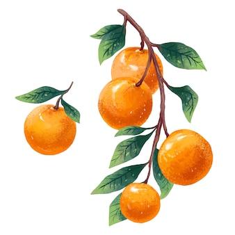 Иллюстрация набора мандаринов