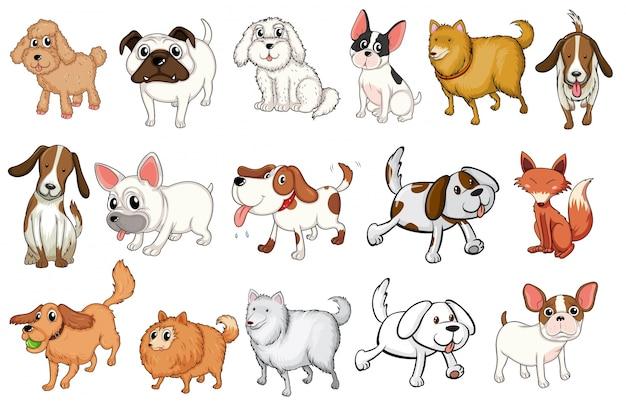 Иллюстрация различных пород собак на белом фоне
