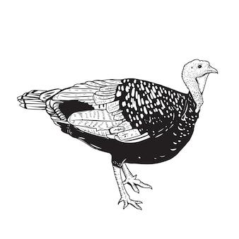 Иллюстрация индюка на белой предпосылке. тема благодарения. элемент для плаката, эмблемы, знака, карточки. иллюстрация