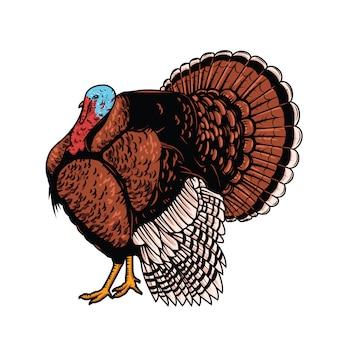 白い背景の上のトルコのイラスト。感謝祭のテーマ。ポスター、エンブレム、看板、カードの要素。図