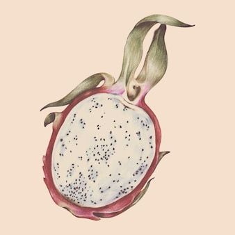 Иллюстрация тропических фруктов акварель стиль