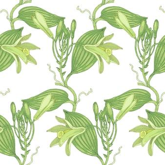 バニラのイラスト。シームレスなパターン。白い背景の上の薬用植物の花。