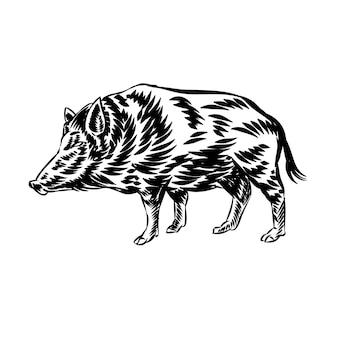 ロゴのイノシシヴィンテージベクトルのイラスト