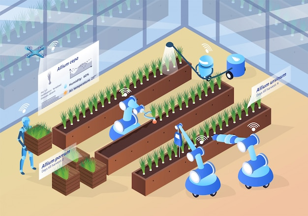 Illustration of onion production isometric.