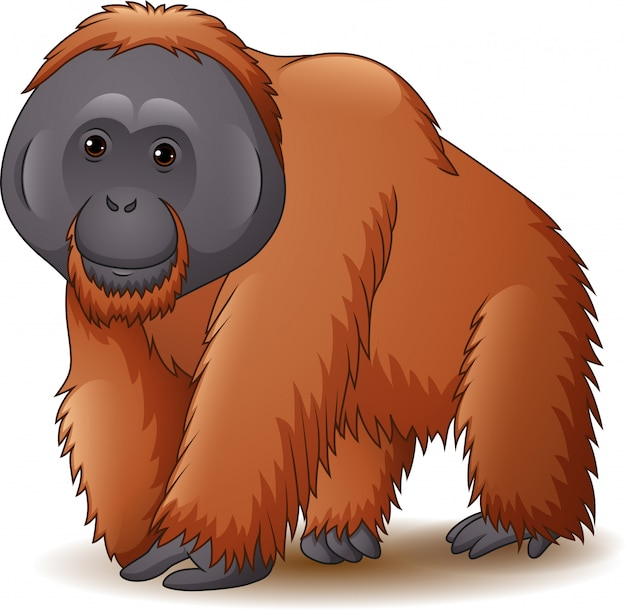 Illustration of orangutan isolated on white background