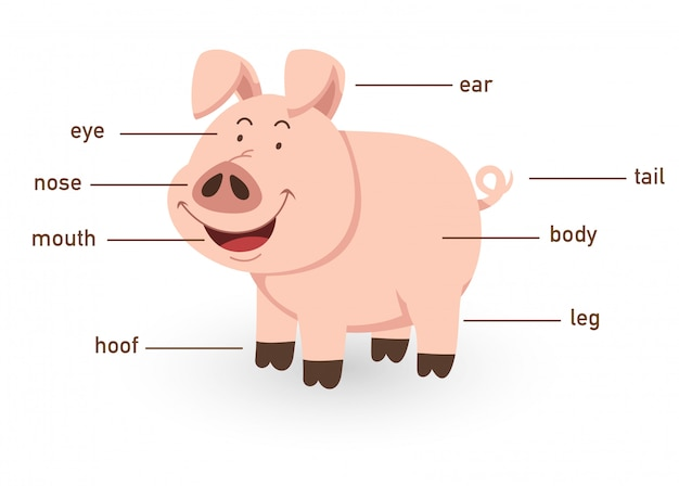 Illustration of pig vocabulary part of body