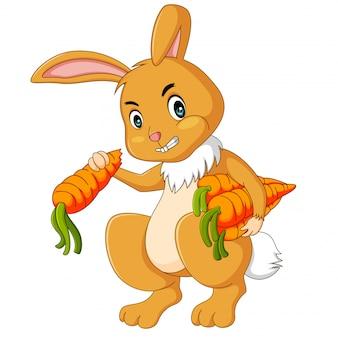 Illustration of rabbits eating carrot cartoon