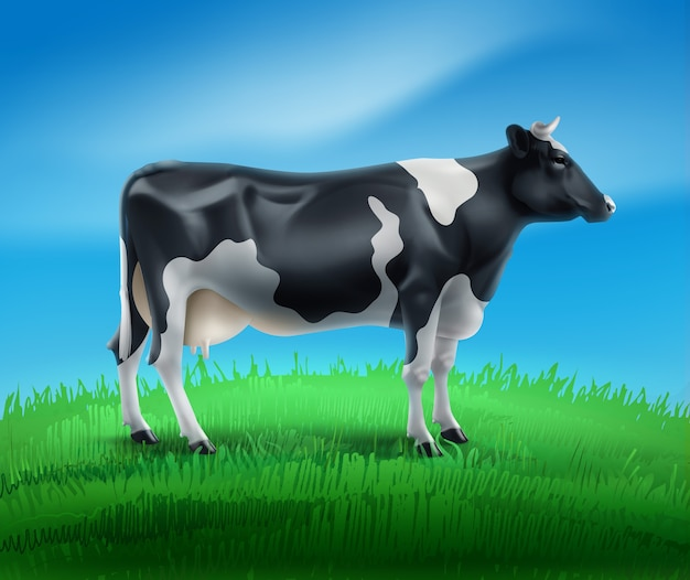 Illustration of realistic black and white spotted cow domestic or farm animal