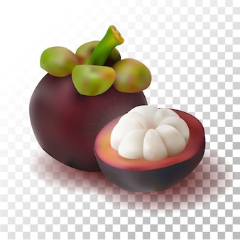 Illustration realistic mangosteen fruit