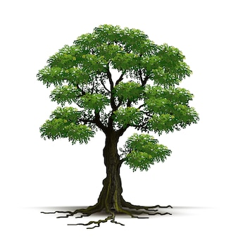 Illustration realistic tree isolated
