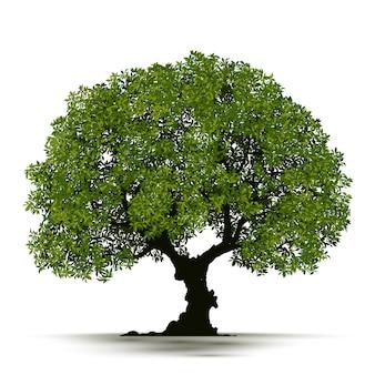 현실적인 나무 절연 그림