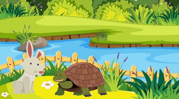 Иллюстрация сцена с кроликом, зайцем и черепахой
