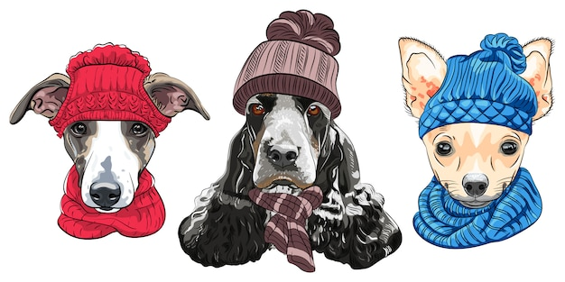 Illustration set four cartoon hipster dogs