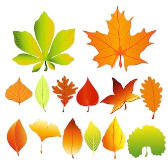 Иллюстрация набор красочных и ярких осенних листьев разных цветов и форм в плоском мультяшном стиле. красные, зеленые и желтые листья.