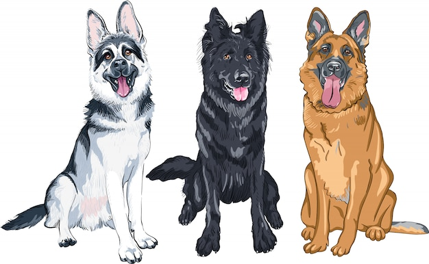 Illustration set of shepherd dogs
