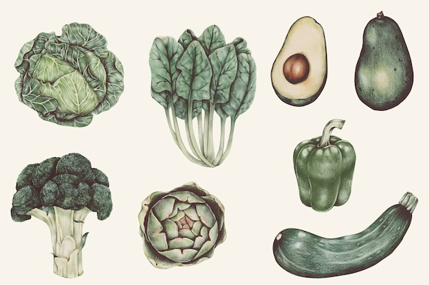Illustration set of vegetable watercolor style