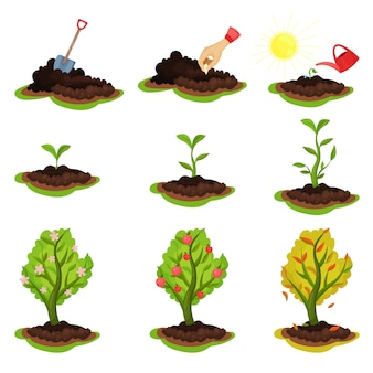Illustration showing plant growing stages. process from planting seeds to tree with ripe apples. gardening and cultivation theme