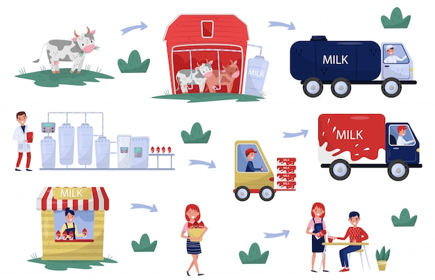 Illustration showing production and processing milk stages from farm to table. organic dairy product